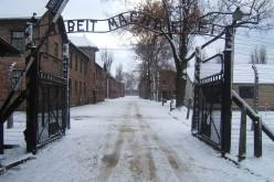 My, dzieci z Auschwitz
