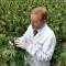 Marihuana leczy, nie zabija