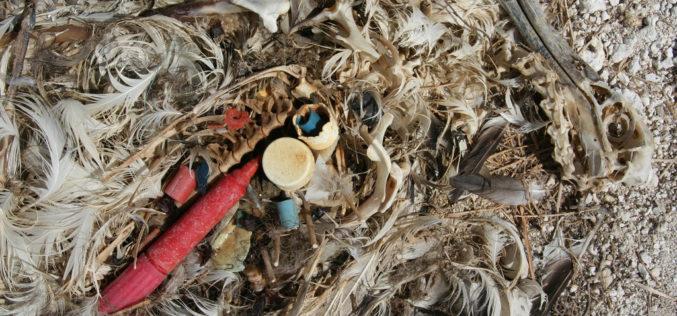 Nowa epoka: żyjemy wantropocenie