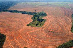 Rzeź dżungli amazońskiej