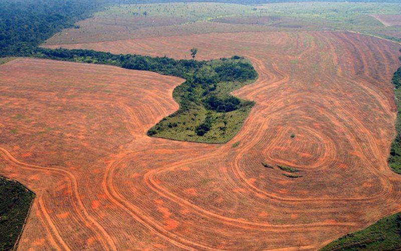 Znalezione obrazy dla zapytania wylesianie amazonii
