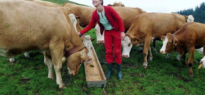 Pasterki nawysokościach