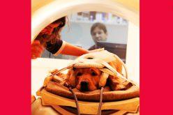 Pies – prymus wnauce oczłowieku