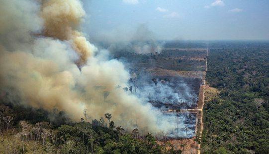 Pożary wAmazonii: mięso ipolityka