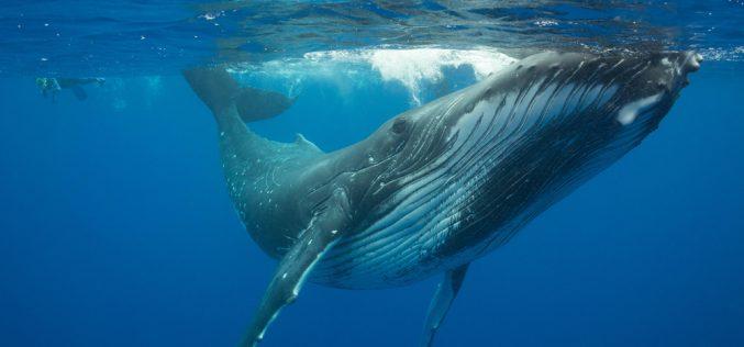 Szlakiem wieloryba