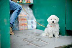 Psy zasługują nawięcej