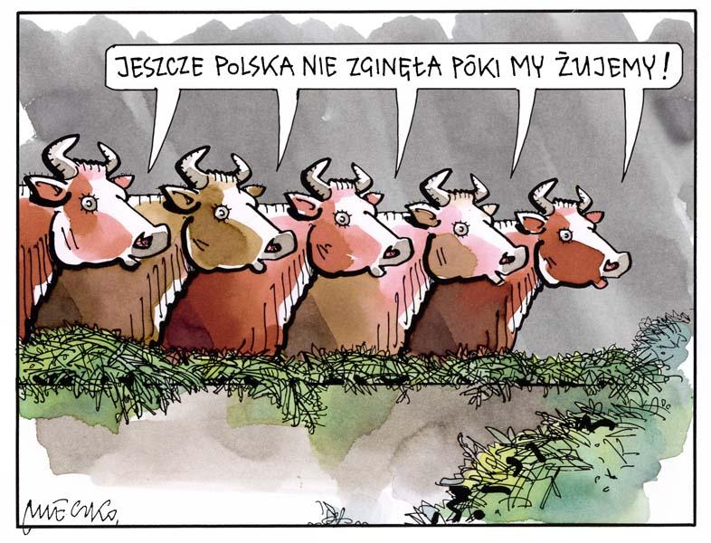 Rysunek A. Mleczki z PRZEGLĄDU nr 40/2020