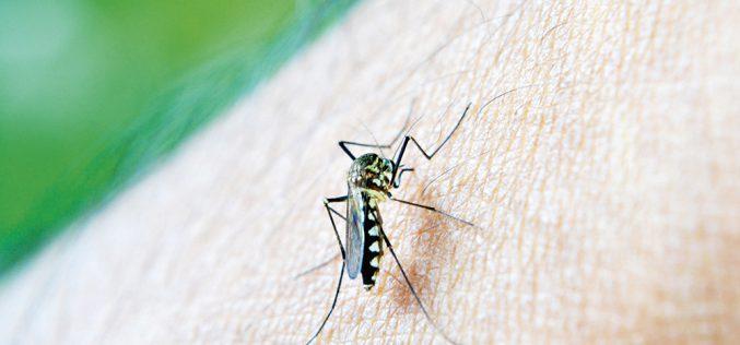 Zabójcze komary