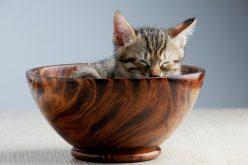3 rzeczy, które musisz wiedzieć kupując dobrą karmę dla kota