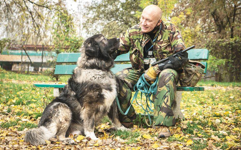 Jak rozmawiać zagresywnym psem