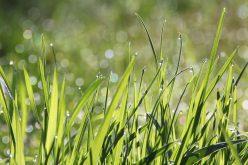 Jak stworzyć piękny trawnik?