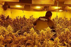 Hiszpańska marihuana zalewa Europę