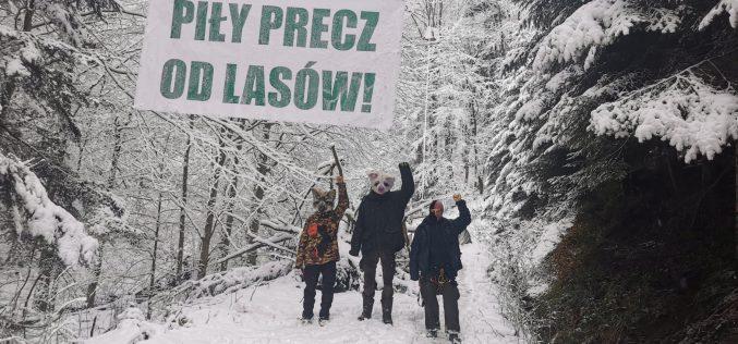 Wilczyce nadal bronią lasu