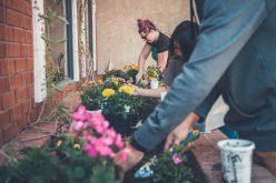 Piękne kwiaty wdomu – jaki nawóz wybrać?