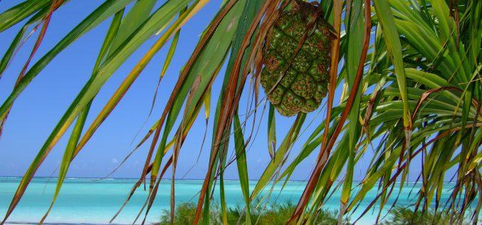 Zanzibar – region pachnący przyprawami