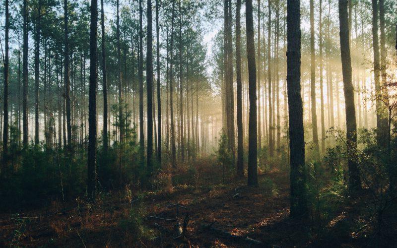 Aktywiści blokują wycinkę drzew naPogórzu Karpackim