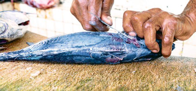 Zepsuta ryba
