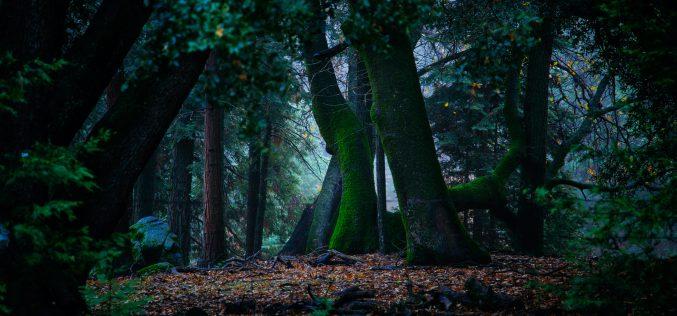 Atak naaktywistów broniących lasu przedwycinką