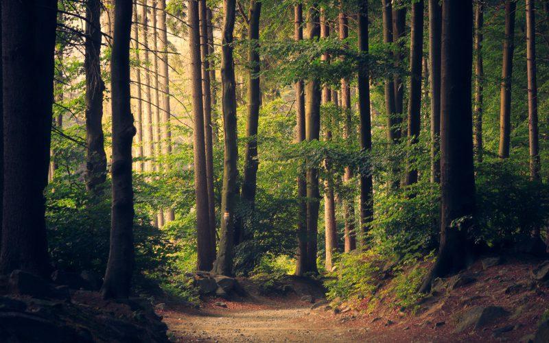 PiS chce sprywatyzować lasy?