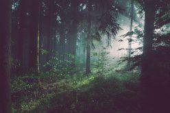 Lasy Państwowe chcą siłą usunąć aktywistów zlasu?