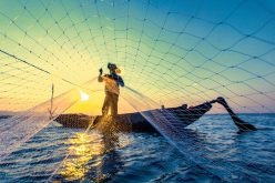 Wtórne zdziczenie mórz