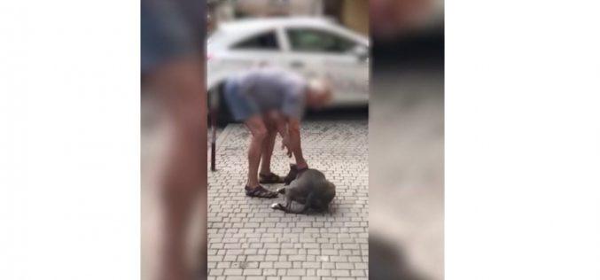 Uwaga! Groźny właściciel psa
