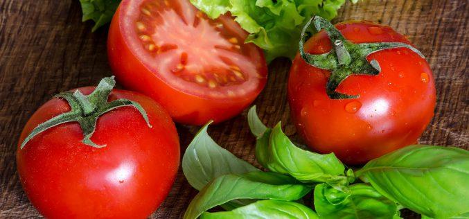 Pomidor – warzywo pożądane wkażdym ogrodzie
