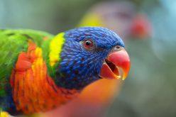 Zwierzęta zmieniają kształty wskutek zmiany klimatycznej